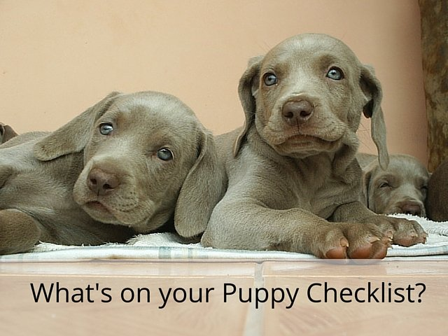 What's on your puppy checklist?
